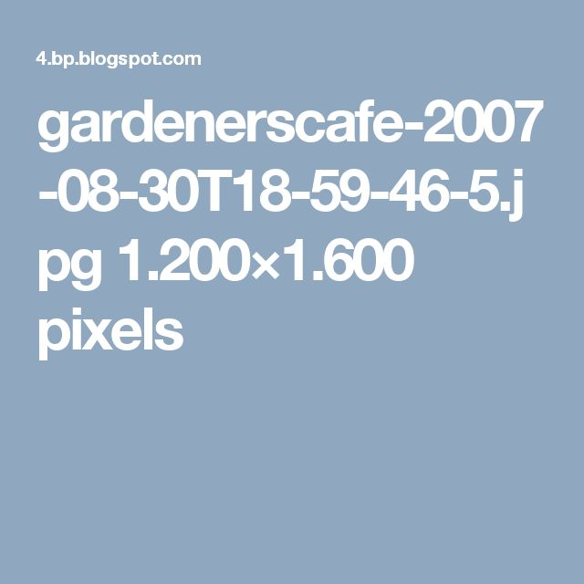 gardenerscafe-2007-08-30T18-59-46-5.jpg 1.200×1.600 pixels