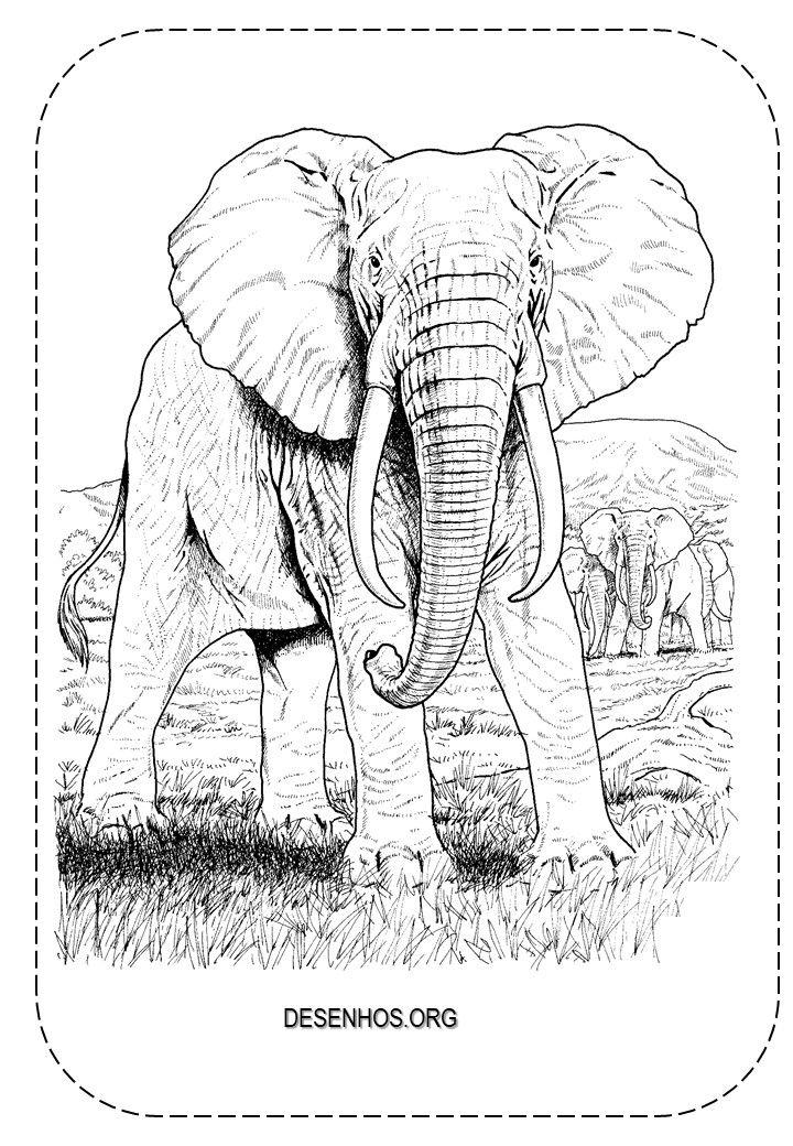 Elefantes Para Colorir Malvorlagen Tiere Elefant Zeichnung Elefantengesicht