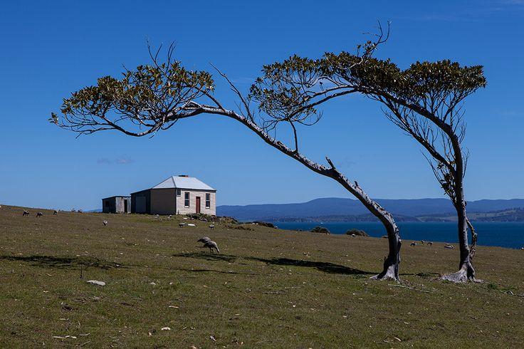 Maria Island National Park | Tours Tasmania