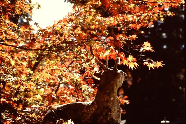 大原野神社 1993年11月22日撮影