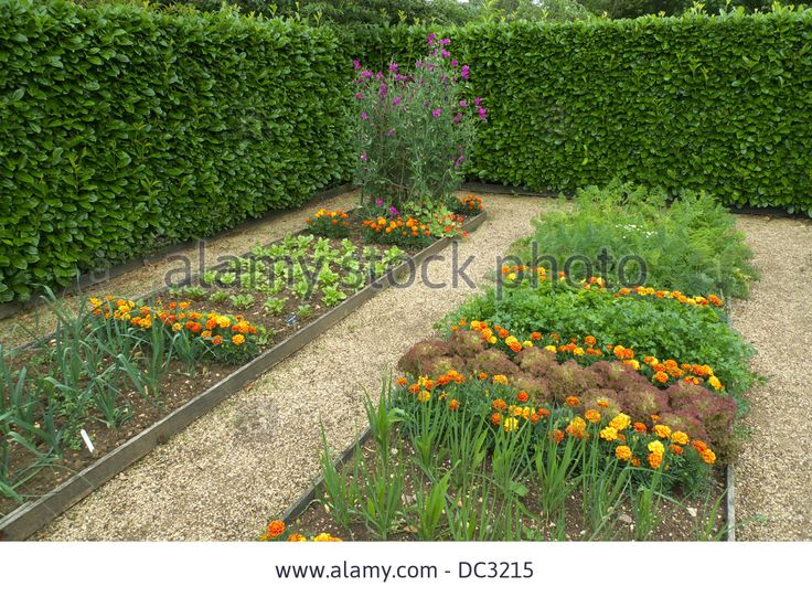 Raised bed plots, kitchen garden, with companion plants to deter insect pests, Geoff Hamilton's Barnsdale Gardens, Rutland, UK. Stock Photo
