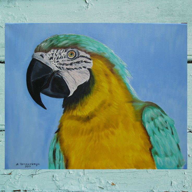 """CAD220 Blue-and-yellow macaw. Original oil painting on canvas. 50 x 40 cm. 20"""" x 16"""". #caramelartgallery #oilpainting #finepainting #originalpainting #oilnocanvas #christmasgift #giftidea"""