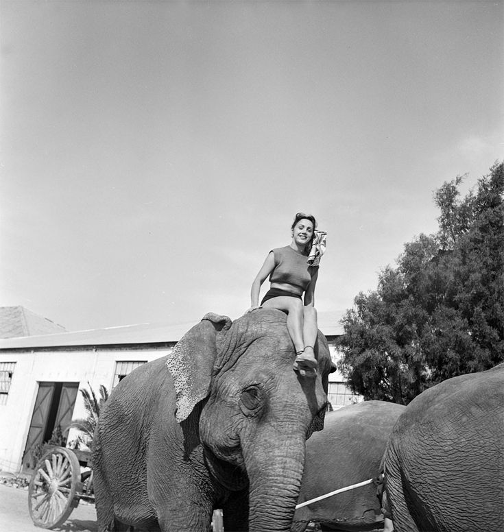 A picture of a circus girl sitting on the head of an elephant during a rehearsal for the Ringling Bros. and Barnum & Bailey Circus in Sarasota, FL in 1949.