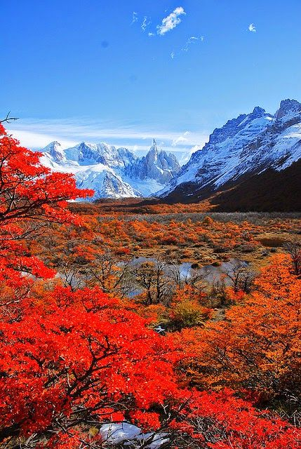 Patagonia-Cerro Torre and autumn leaves . Patagonia Cerro Torres y las hojas de…