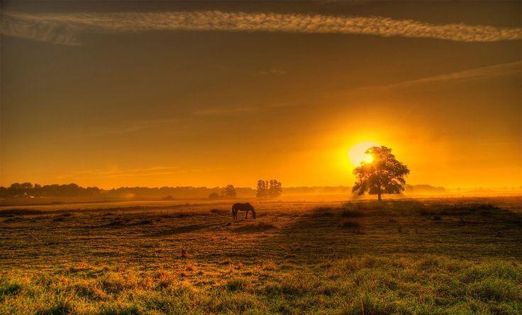 Le pâturage - Un cheval au pâturage au soleil couchant