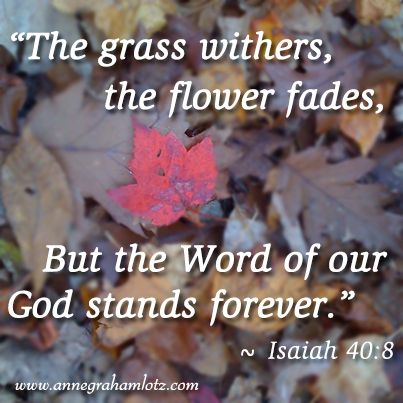 Anne Graham Lotz | The grass withers, the flower fades, But the word of our God stands forever. Isaiah 40:8 #lessonsfromthefigtree