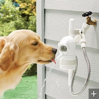 Motion Sensing Automatic Outdoor Pet Fountain this is something to look into