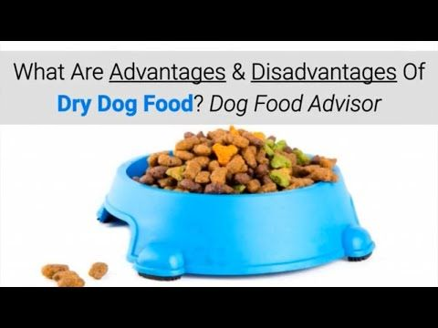 What Are Advantages Disadvantages Of Dry Dog Food Dog Food