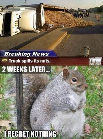 Hahahah oh my god that is the fattest squirrel I have ever seen.