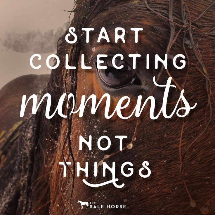 17 best horse quotes on pinterest horse riding quotes