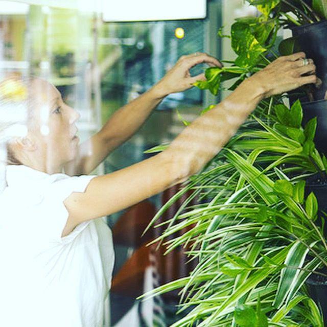 Atmosphy Green Wall Www.atmosphy.com.au #greenwall #vertical garden #green wall #plants #garden design
