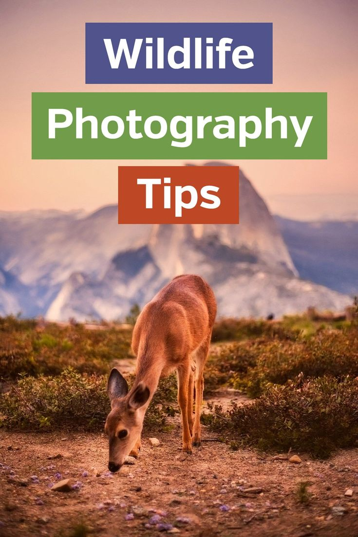 Tips for Wildlife Photography