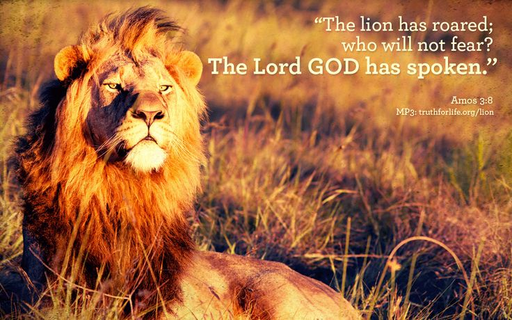 """Wallpaper: """"The lion has roared..."""" - Truth For Life"""