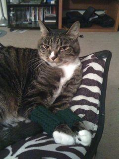 cat leg warmers   Free Pattern