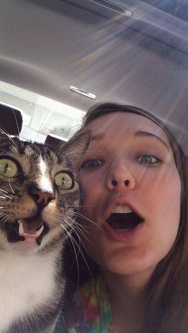 animais-que-não-querem-tirar-selfies-28