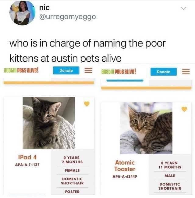 Someone S Giving The Cats At Austin Pets Alive A Ton Of Ridiculous Names Funny Pets Funny Memes
