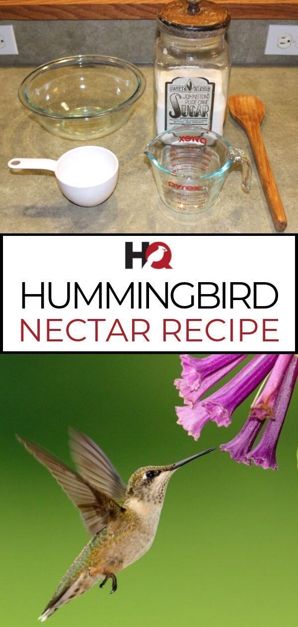 Learn The Simple Hummingbird Nectar Recipe You Should Be Using Today Make Delicious Hummingbird Hummingbird Nectar Recipe Hummingbird Food Hummingbird Nectar