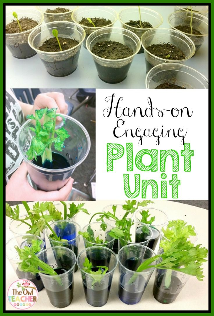 Best 25 plant parts ideas on pinterest teaching plants parts plants unit needs structures functions classification and life cycle robcynllc Gallery