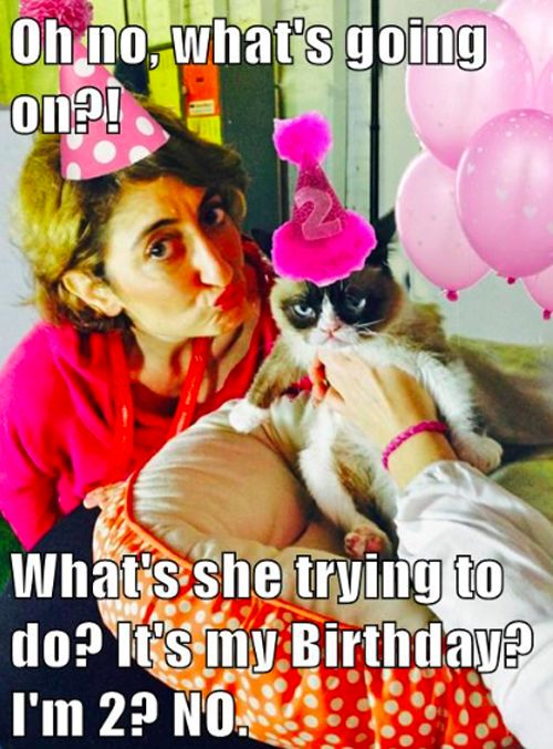 GRUMPY MEME - win some great prizes just b/c Grumpy is turning 2! http://ihavecat.com/2014/04/04/the-terrible-twos-catch-up-with-grumpy-cat-lets-help-her-celebrate-against-her-will-of-course/