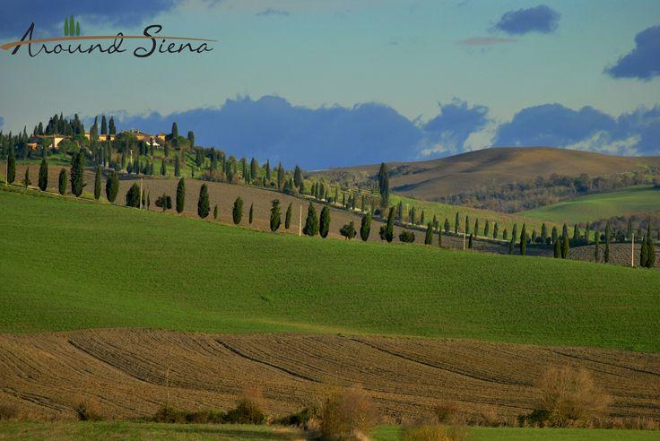 Leonina. www.aroundsiena.it Around Siena is a different way to visit Siena; experiences and much more! Around Siena è un modo diverso per visitare Siena; esperienze e molto altro!