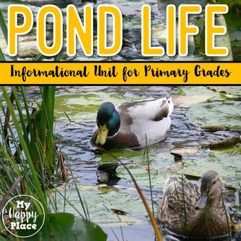 This informational unit on pond life includes all you need to get your students learning, reading, and writing about the animals and plants of the pond habitat!This set is designed to help you teach about pond habitats using informational text and writing.
