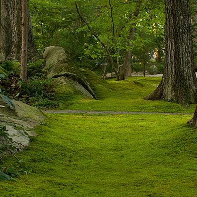 Our backyard was covered in moss.   I never wore shoes and the feeling of the cool soft moss  under my bare feet was intoxicating.