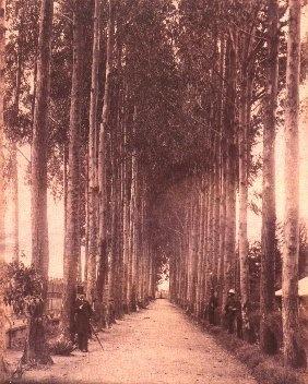 1895, Alameda en el Parque del Centenario - Bogotá, Colombia