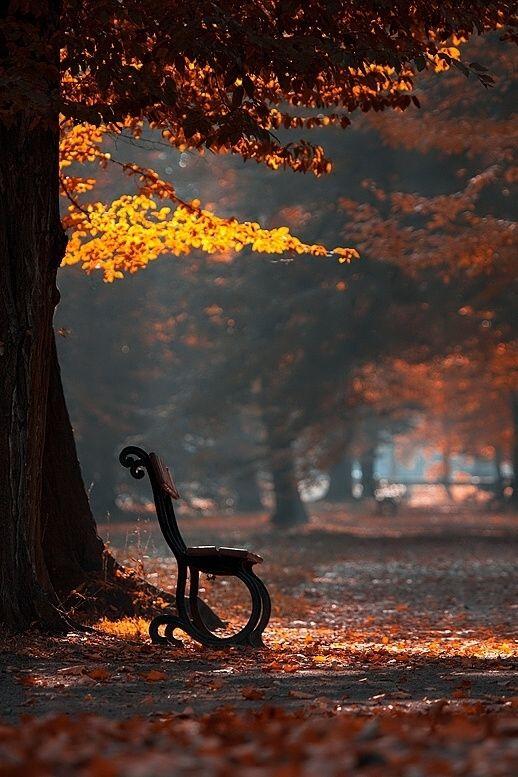 autumn alone  magicalnaturetour:In the Park by Adamec :)