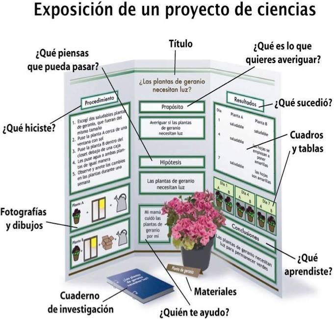 17 best images about projectes on pinterest animales for Proyecto de investigacion de plantas ornamentales