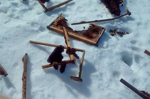 Επιδρομή γουνοφόρων ζώων σε κοτέτσια και μελίσσια στην Ελάτη! (του Χριστόφορου Γκούμα)