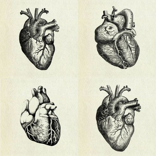 """hearts: both my parents are cardiologists, they spend more time with this organ than they do with anything else in the world. the other day i told my mom, """"no heart attacks today, they can all wait for tomorrow""""."""