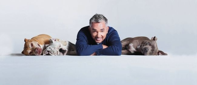 Cesar Millan is on tour! We love his shows and now we get to see him live?! Unreal! http://www.eventfinda.com/tour/2013/cesar-millan-tour