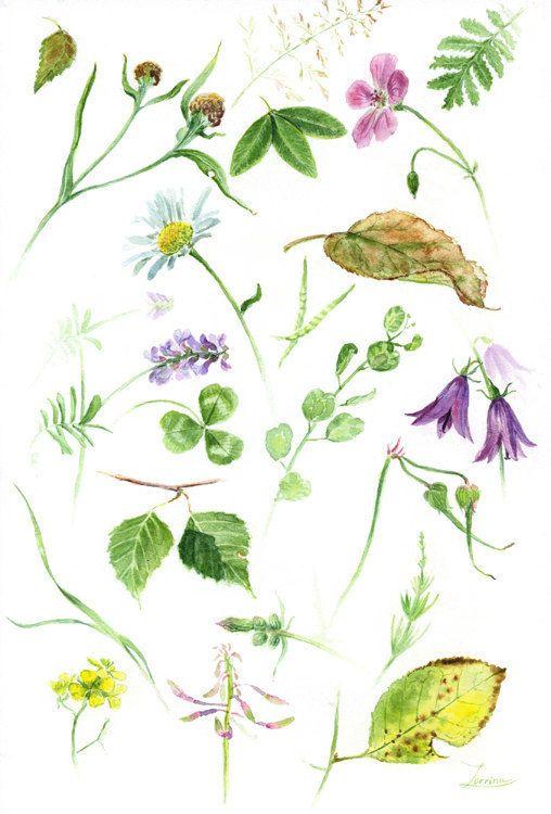 Watercolor hand painting green leaf, flowers. Herb Floral Botanical Wildflower Herbarium art. JPG download. High resolution digital file  by ZorrinaArt