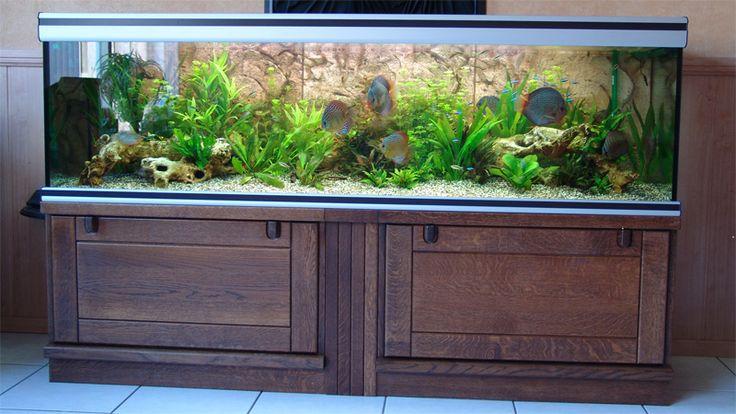 Betekenis aquarium: Een glazen bak waarin bijv. vissen kunnen zwemmen.