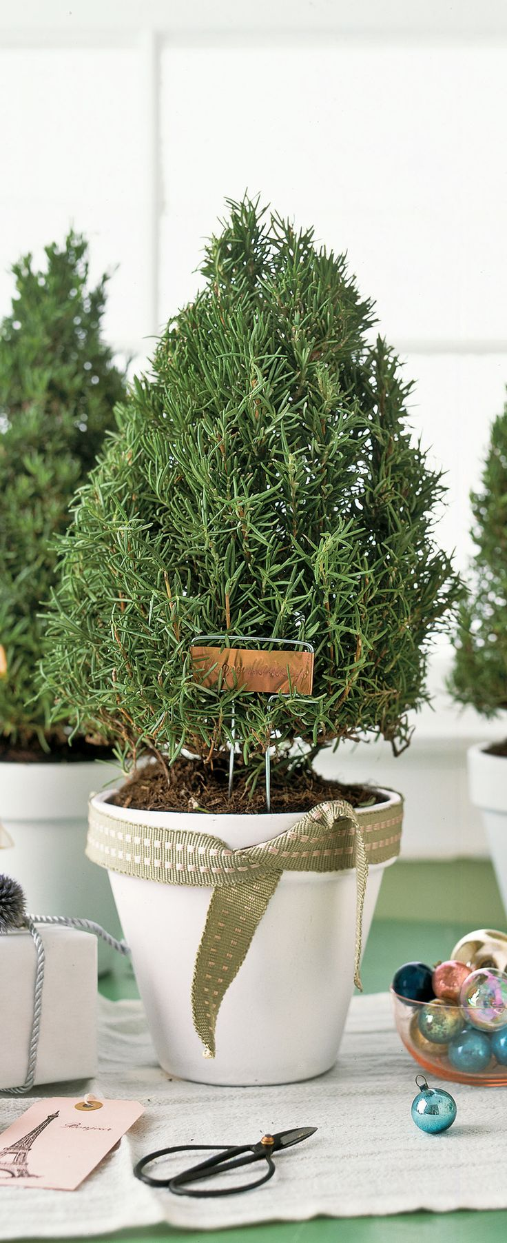 Best 25+ Rosemary plant ideas on Pinterest | Rosemary garden ...