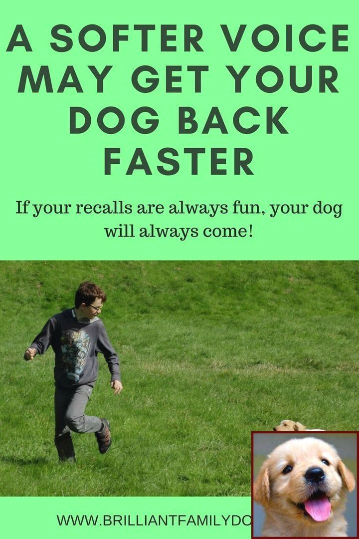 Dog Behavior Training Aggression And Dog Training Courses Online