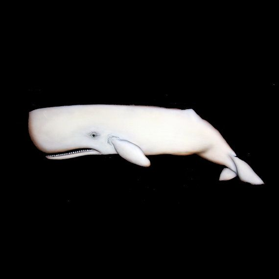White sperm whale sculpture