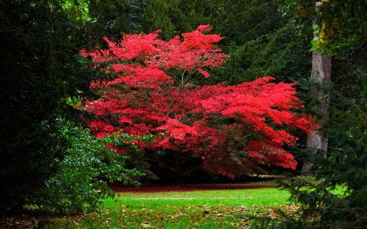 Autumn colours: Westonbirt, National Arboretum, Glos