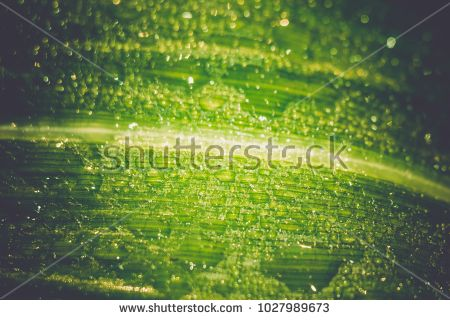Fresh green leaves with drops of water close up.