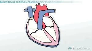 Bildresultat för heart in pericardium