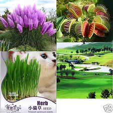 1740 seeds of Venus flytrap cat grass purple pampas Ever Green Lawn Turfgrass