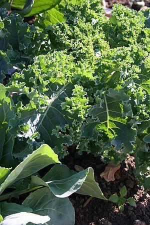 Die 25+ Besten Ideen Zu Pflanzen Schatten Auf Pinterest ... Pflanzen Im Garten Tipps Passenden Pflanzenarten