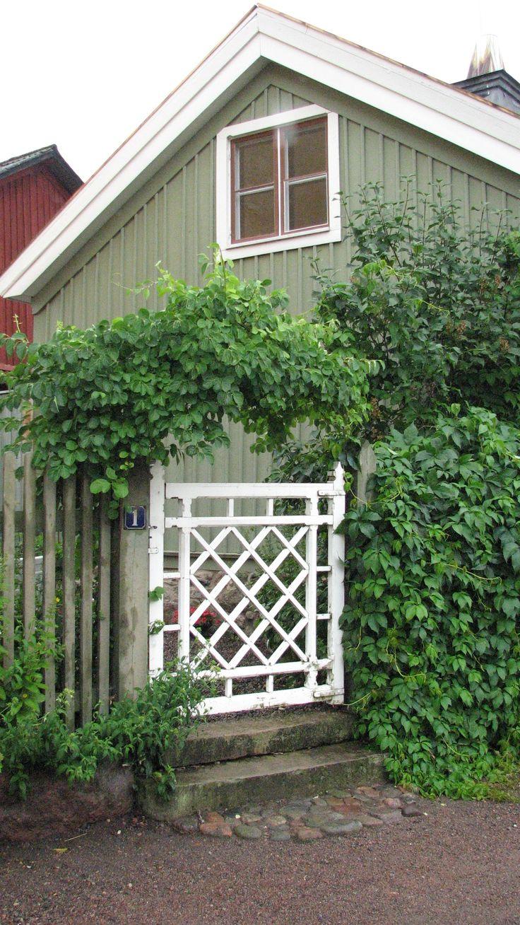 9 best Kopparlönn images on Pinterest | Deciduous trees, Garden ...