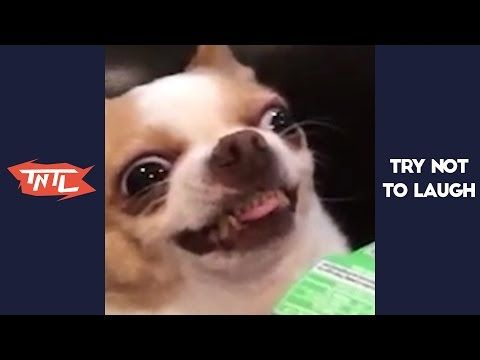 We challenge you to Try Not To Laugh Or Grin at this weekly compilation of the funniest animal videos!. Some of the collection includes animal fails, cute animal videos, hilarious animals & more. source