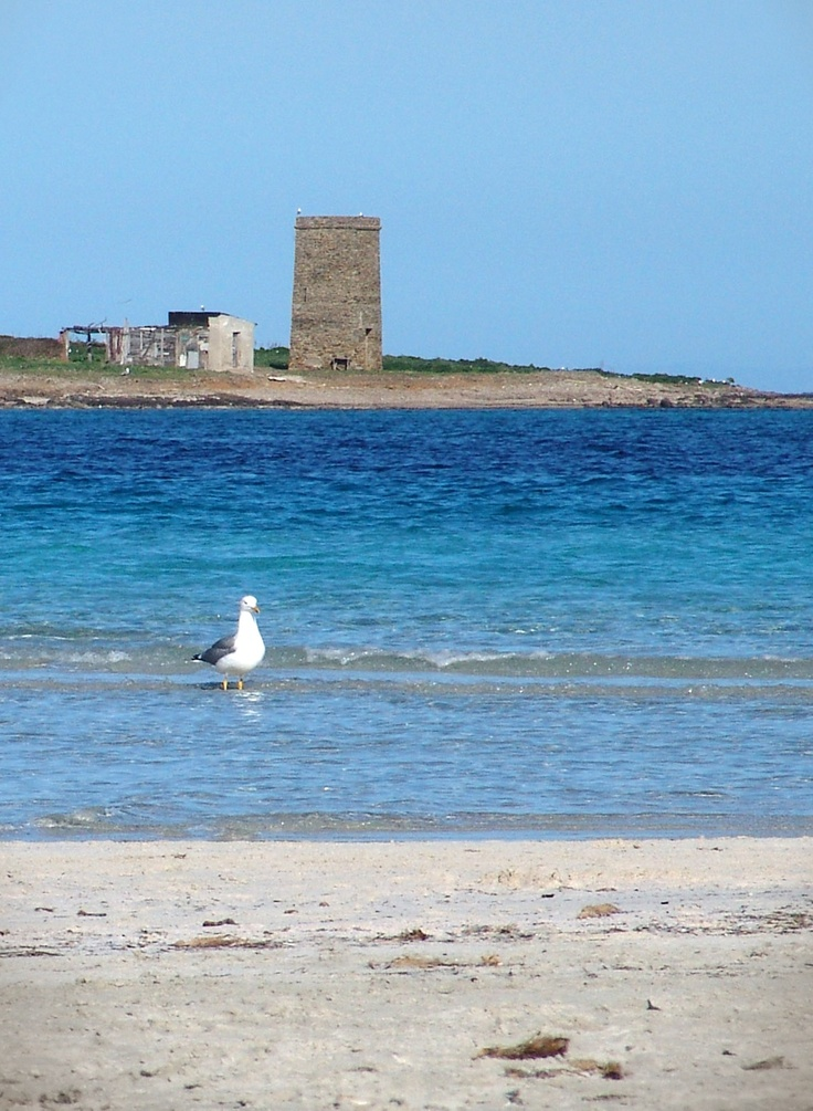 La Pelosa, just seagulls go to the beach in this cold cold October.