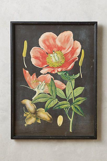 Botanical Specimen Print | Home, Black backgrounds and ...