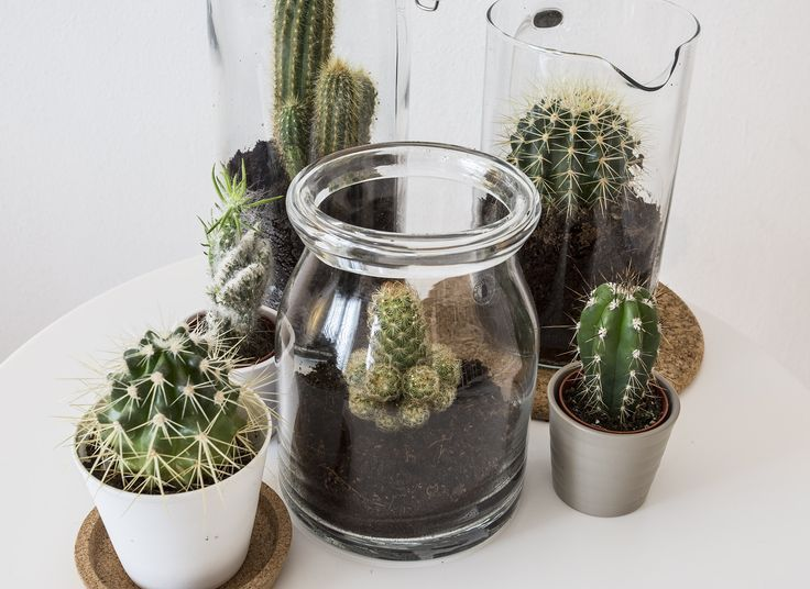 CACTACEAE cactus | Deze pin repinnen wij om jullie te inspireren. IKEArepint IKEA IKEAnederland groen decoratie accessoires woonkamer slaapkamer vaas potten planten groen inspiratie wooninspiratie