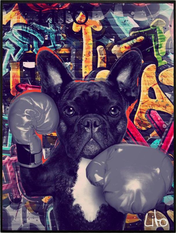 Bulldog bull dog animal cachorro grafite desenho ilustração cão boxe luta luva