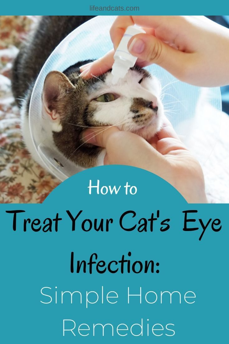 Keep Your Cat S Beautiful Eyes Clean And Healthy Life Cats In 2020 Cat Eye Infection Cat Eye Problems Eye Infections