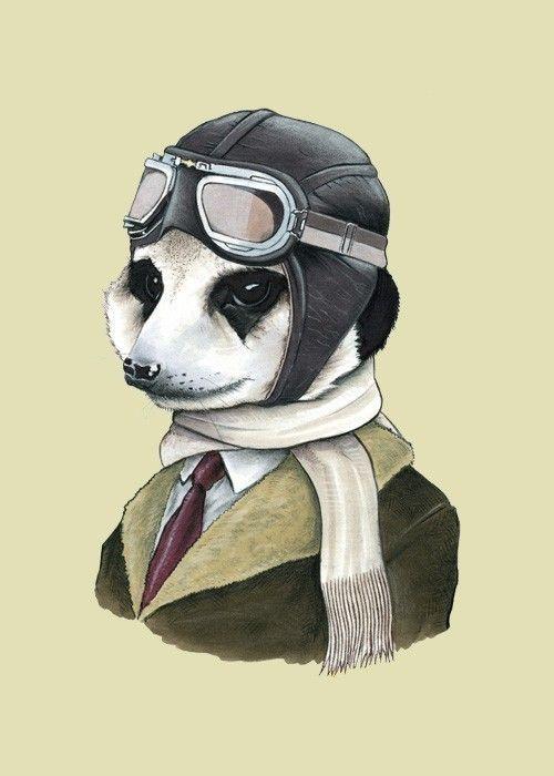 amazing meerkat portrait